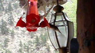Kolibříci z Colorada 2