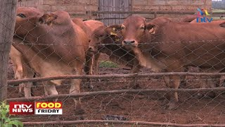 Food Friday: New vaccine for Livestock Lung Disease set to be introduced
