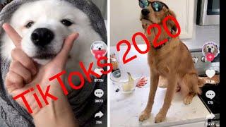 Tik Toks funny animals videos 2020  #12