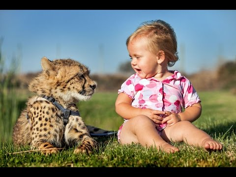 Cheetahs Best Friends With Children