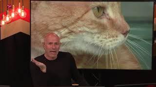 Dierenambulance waarschuwt katteneigenaren voor kantelraam