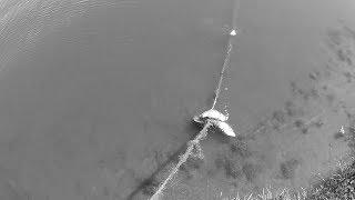 Жесть!!! Вытащил браконьерскую сеть из воды !