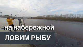 Рыбалка в тюмени на реке тура