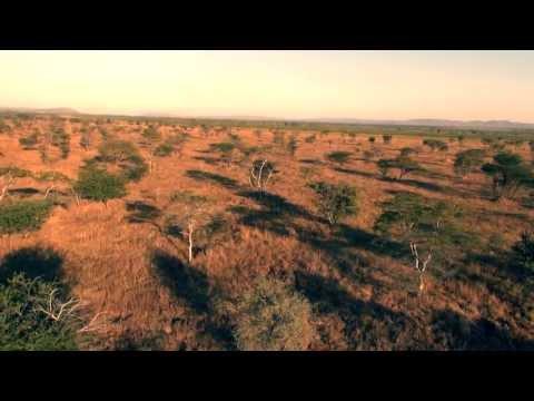 MAMA ZAMBIA   Uwa Yemba Africa