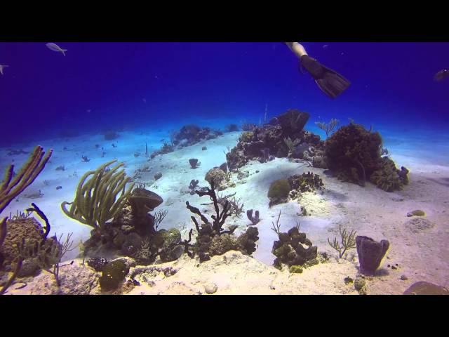 Santa Rosa Reef and Paradise Reef Dive