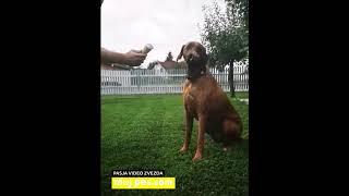 Brija – Video natečaj 2020 – Revija Moj Pes #Brija #MojPes