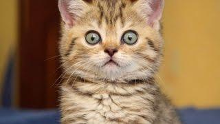 Приколы! Про котов. Эти забавные животные. Заряд энергии 100%
