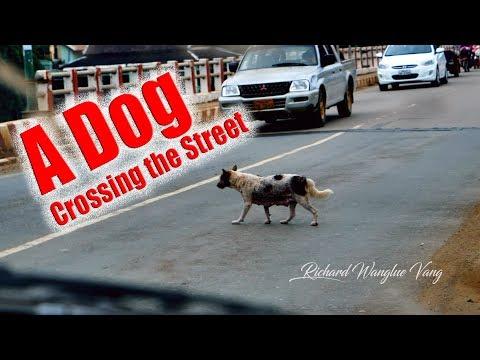 RWV: A dog is crossing the street