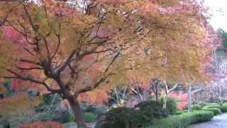 奈良紅葉の名所2014関西花の寺當麻寺西南院~奥院~中之坊