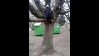 preview picture of video 'Bonzo skoczek na drzewo,trening amstaff pruszków'