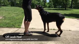 Dog Training: 18 Month Old Rottweiler, Roman! Before and After Two Week Board and Train