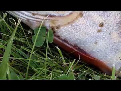 Меры борьбы с грибами паразитами сельскохозяйственных растений