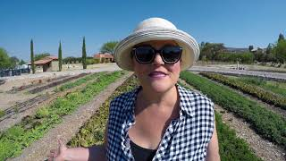 Organic Farm in San Miguel