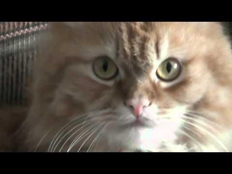 Кот семга миломан