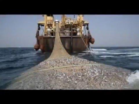 Grandes problemas de la pesca a gran escala...