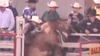 Horses Shocked At Salinas Rodeo