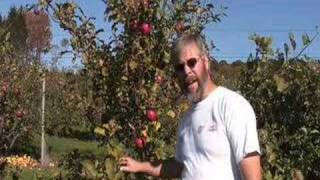 UMass Fruit Advisor - Topaz And Novaspy