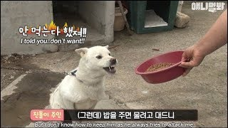A dog which gets mad when someone gives him food (There's a plot twist)