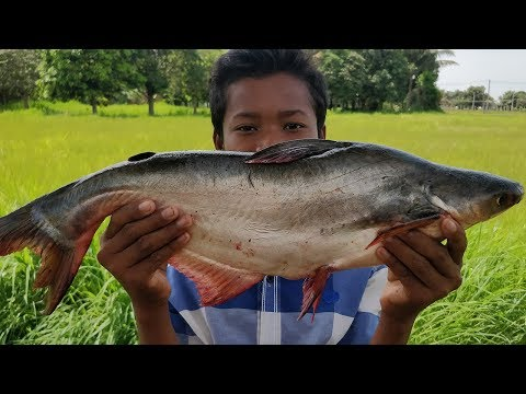 2Kg Fish Recipe / Delicious Cooking Big Fish Soup Ingredient