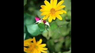 理查德·克萊得曼~神秘花園