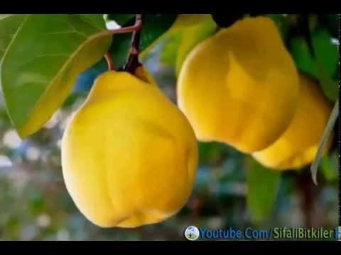 Das Ekzem die Behandlung von der Agave