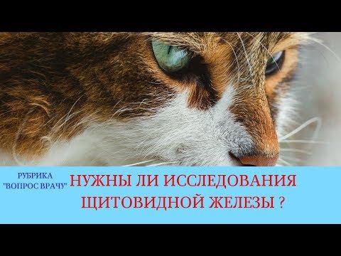 02.02.18 Болезни щитовидной железы у кошек