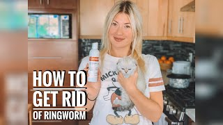 HOW TO GET RID OF RINGWORM ON CATS