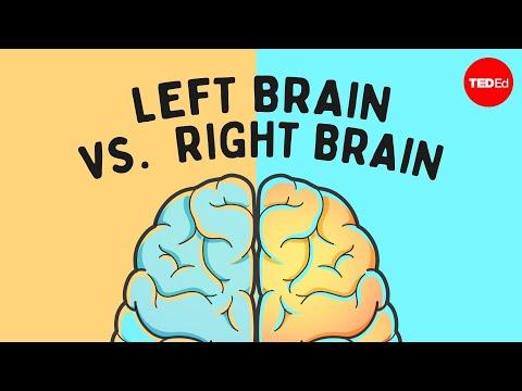 חשבתם שלמוח שלכם יש צד יותר דומיננטי? מתברר שאתם טועים
