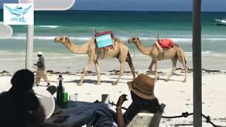 preview picture of video 'Kenya: Circuit Luxe Safari & Plage'