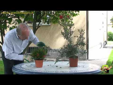 coltivazione delle piante in vaso