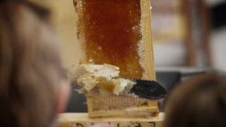preview picture of video 'WV Honey Festival - Parkersburg, WV'