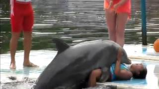 Dolphin Rapes Girl!
