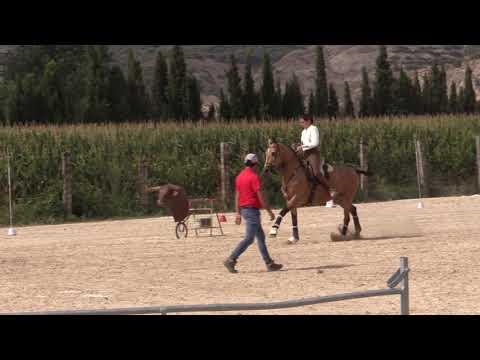 Equitación de Trabajo 280821 Video Velocidad 1
