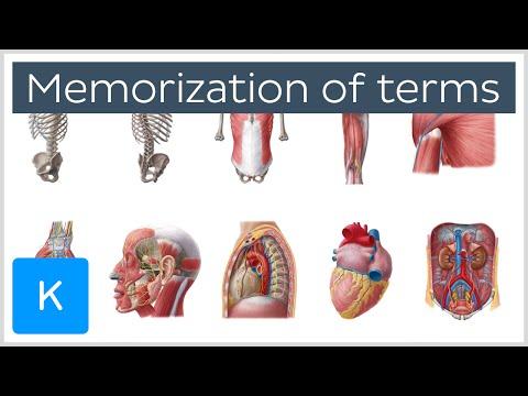 How to Memorize Anatomy Terms in 4 Steps - Human Anatomy |Kenhub