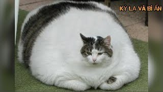 10 con mèo khủng nhất Thế Giới thật không thể tin nổi