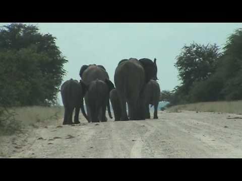 Kruisende Olifanten, Etosha, Namibië