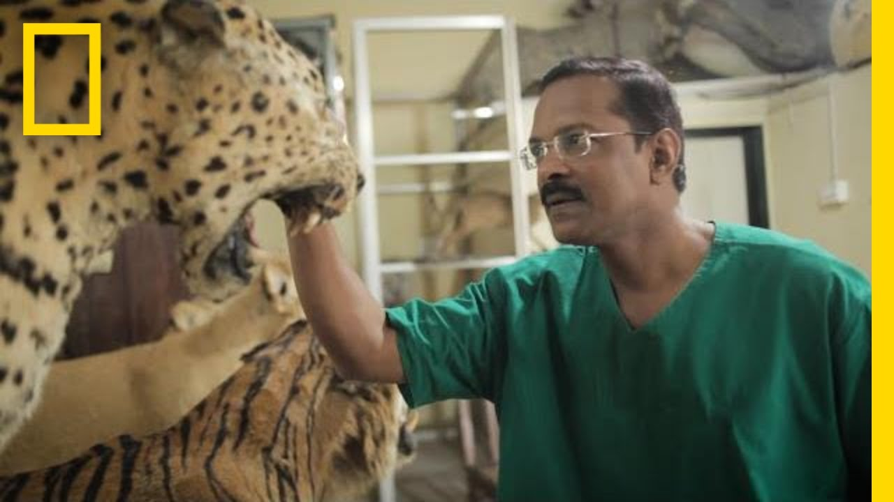 This Self-Taught Taxidermist May Be the Last One in India | National Geographic thumbnail