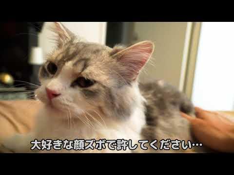 , title : 'うっかり寝落ちしたら猫が不機嫌になっちゃいました…