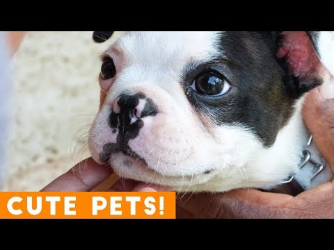 Best Cute Pets of the Week Compilation ft. Dogs & Cats   Try Not to Laugh Funny Pet Videos FPV 2018
