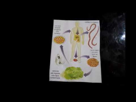 Le régime au traitement de la lamblia