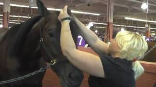 The 2009 Meadowlands Pace