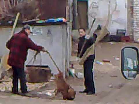 Догхантеры корейцы-убийцы собак- друга Человека/ Doghunters Koreans-dog killers- man's friend