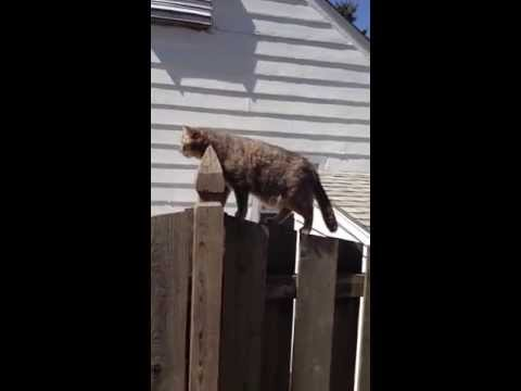 Amazing cat doing amazing things! As seen on TV. VIRAL