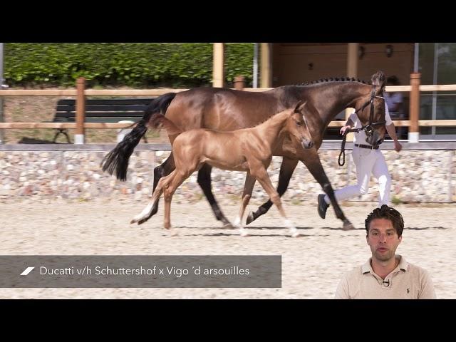 Diva RV Z (Ducatti v/h Schuttershof x Vigo ´d Arsouilles)