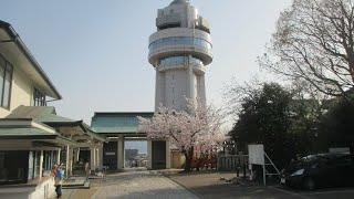 人丸山公園 桜