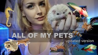How Many Animals Do I Own? (ROOM TOUR)