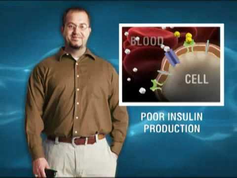 Sustorina kraujo insulino