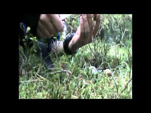 Il fungo su dita del piede al bambino che trattare