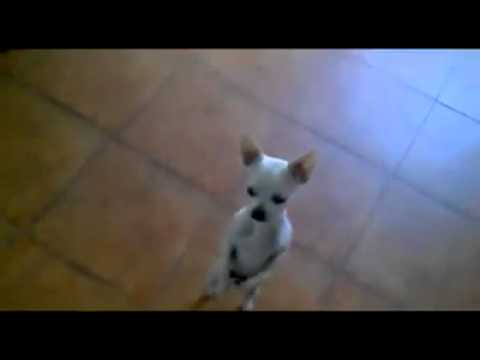 Bester Hund ever