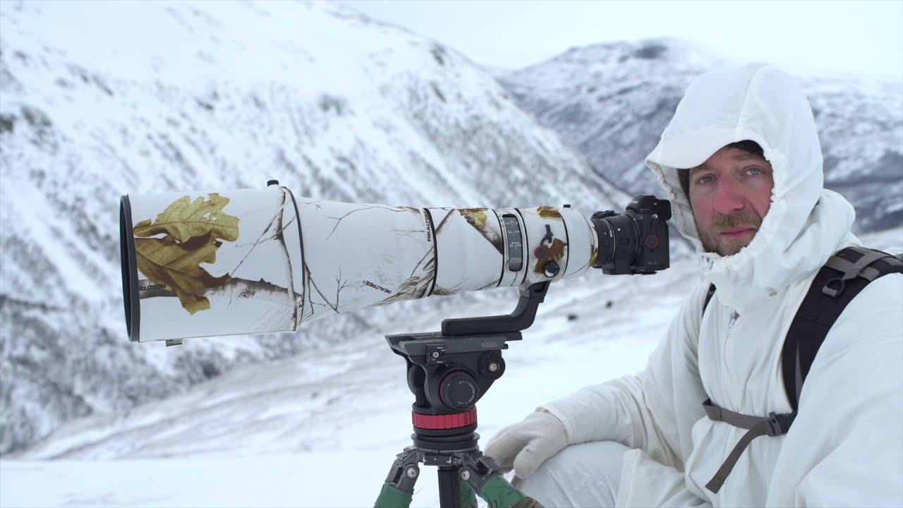 wildlife photography at ellesmere island norway morten hilmer